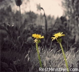 What is The Secret To Discovering God's Will In Our Illness?
