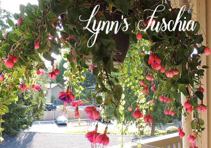 lynnsflower