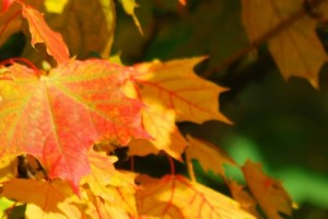 Are You Tired? Autumn is Your Invitation